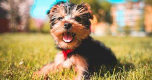 15 interesting dog facts