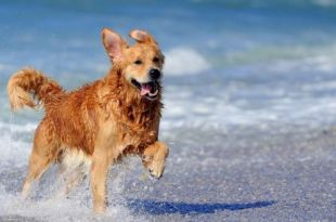 4 Tips To Protect Your Dog This Summer