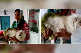 Pomeranian dog allegedly raped in UP by 3 persons