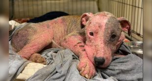 Buried dog found sunburned | US dog