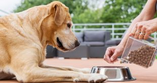Dog eating packaged food | Pet ecommerce sales boost in India
