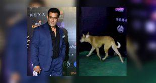 Salman Khan at IIFA 2019