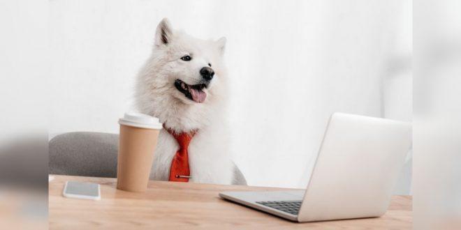 Pet business marketing solutions