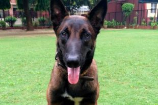 Kolkata Police Force Will Recruit the 'Belgian Malinois' Dog Breed