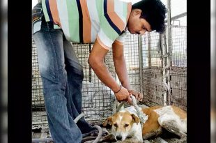 Street Dogs to Be Captured and Removed from Donald Trump's Route to Stadium in Ahmedabad