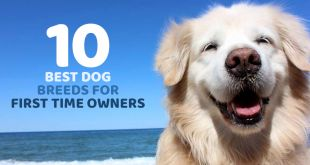 10 Best Dog Breeds for First Time Owners
