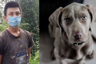 32-year-old in Sikkim Arrested for Brutally Killing Dog after Quarrel With Family