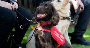 Former Kinross Guide Dog Joins Elite Team Detecting Covid-19