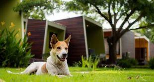 Dog Adoption Trending In Indore Dogexpress