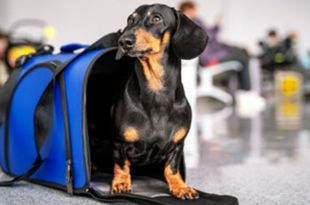 Top 11 Must Have Pet Essentials Not To Miss. And, #4 Is Most Important