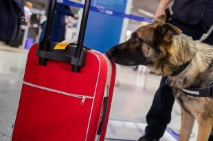 COVID-19 Dogs Introduced at Helsinki to Identify Infected Passengers