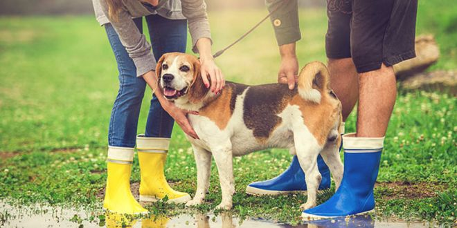 How To Take Care of Pet Dogs During Rainy Season