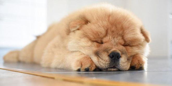 Lazy Dog Breeds That Can Be Left Alone