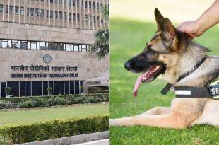 IIT-Delhi ad for Dog Handler Post Garnered Attention on Social Media