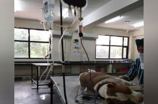 Blood bank for dogs established in Punjab's Ludhiana, first in north India