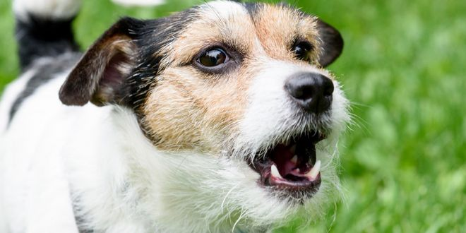 How to get your Dog to Stop Barking?