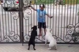 Boy Does Bhangra In Front Of Dogs. Their Reaction Is Hilarious