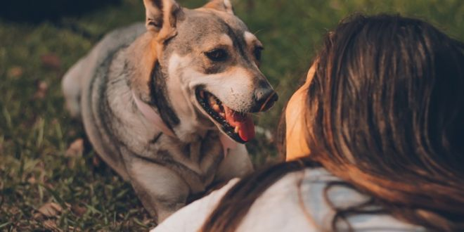 6 Reasons Why Dogs Are Considered Man's Best Friend