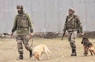Indian Army Dogs keep Danger and Stress at bay for Soldiers in Jammu and Kashmir
