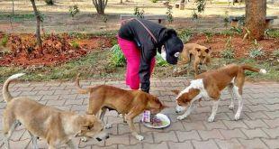 PFA Cracks down on Illegal Dog Breeding in Mysuru