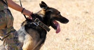 The Fascinating Life of a Police Dog