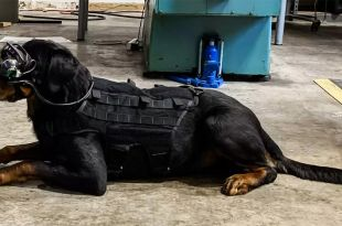 US Military Dogs to Get AR Goggles for Better Communication