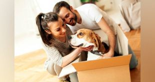 How to make it Easier for You & Your Dog?