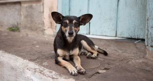 India is Struggling Hard to keep Rabies at Bay or to Fight Rabies
