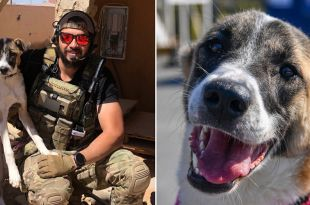 Combat Vet Soon to be Reunited with beloved Syrian Rescue Dog