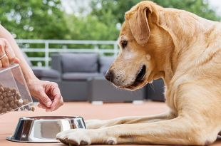 What to Feed Your Dog to Regain Health