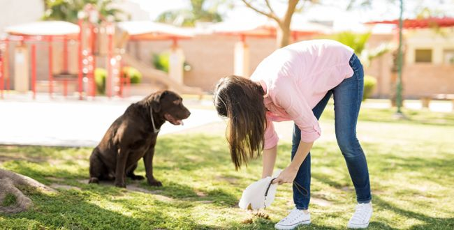 How To Be A Responsible Pet Parent? Scoop Up Your Dog's Poop!