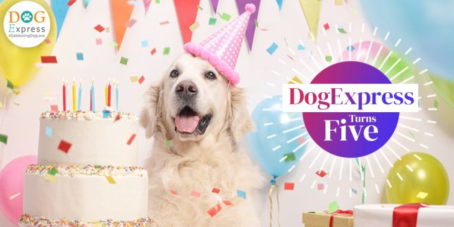 DogExpress Turns five! The Largest Dog Lovers Community in India