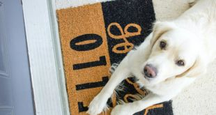 Why Do You Need To Upgrade to A Pet-friendly Doormat?