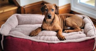 6 Tips for Buying the Perfect Dog Bed
