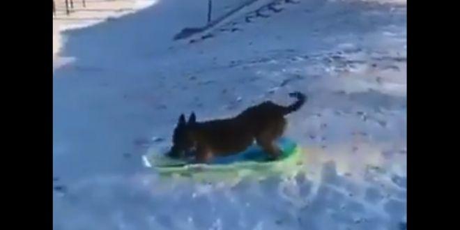 Dog Enjoys Snowboarding in Adorable Viral Video.