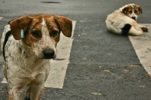 Man Riding Bike Loses Life while trying to Save Stray Dog in Tamil Nadu