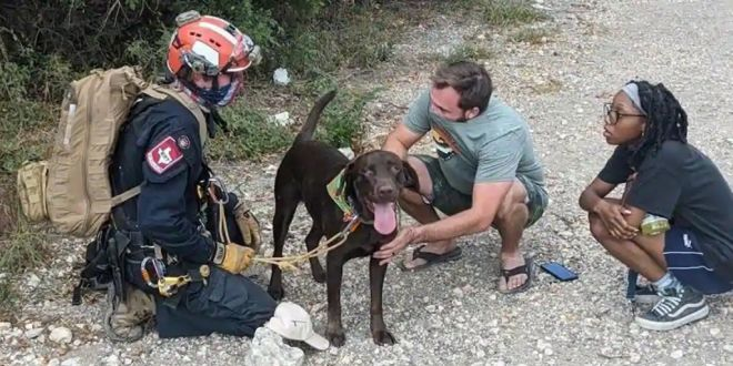 Dog Survives 70 Foot fall from Texas Cliff. Tale of its Rescue is Winning Hearts