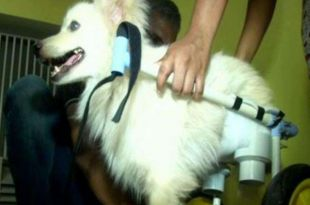 Pet Lover in Coimbatore Designs Wheelchair for Disabled Dog