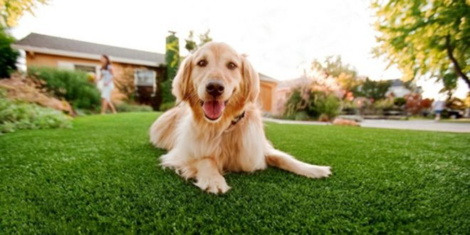 How Artificial Grass Could Be The Best Thing For Your Pet Dog?