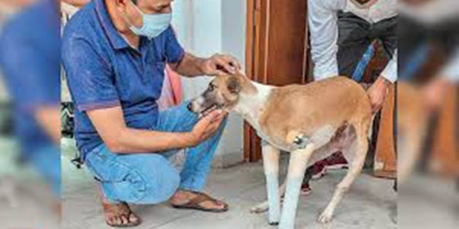 Pup that Lived after Coming Under Train in Faridabad finds Home in UKPup that Lived after Coming Under Train in Faridabad finds Home in UK