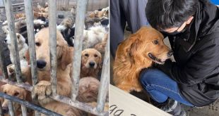 29 Dogs Rescued From China's Dog Meat Trade Reach the U.S. and Meet Their New Forever Families