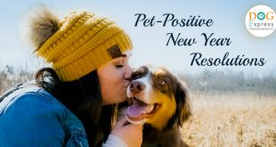 Essential Pet-Positive New Year's Resolutions for 2021