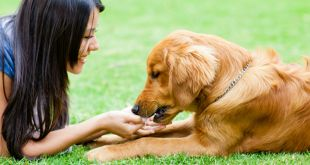Five Natural Ways to Improve Your Dog's Immune System