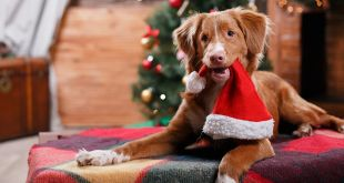 How To Celebrate Christmas With Your Fur Babies