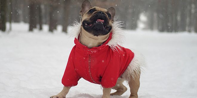 How To Make The Winter Comfortable For Dogs