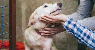 Tips to Help a Rescued Dog Adjust to a New Home