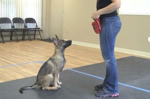 7 Basic Commands Used to Train a Dog