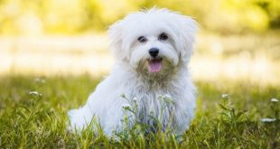 10 Best Dog Foods For Dogs With No Teeth