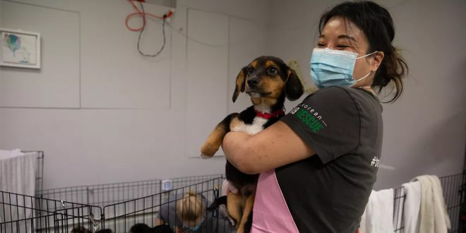 Dog Rescues Curbed by Surging Global Travel Costs Driven by Pandemic