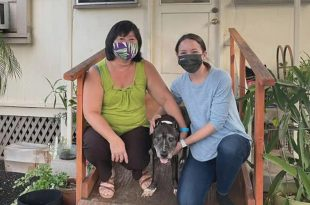 Dog Returns to her Family After a 12-Year Journey